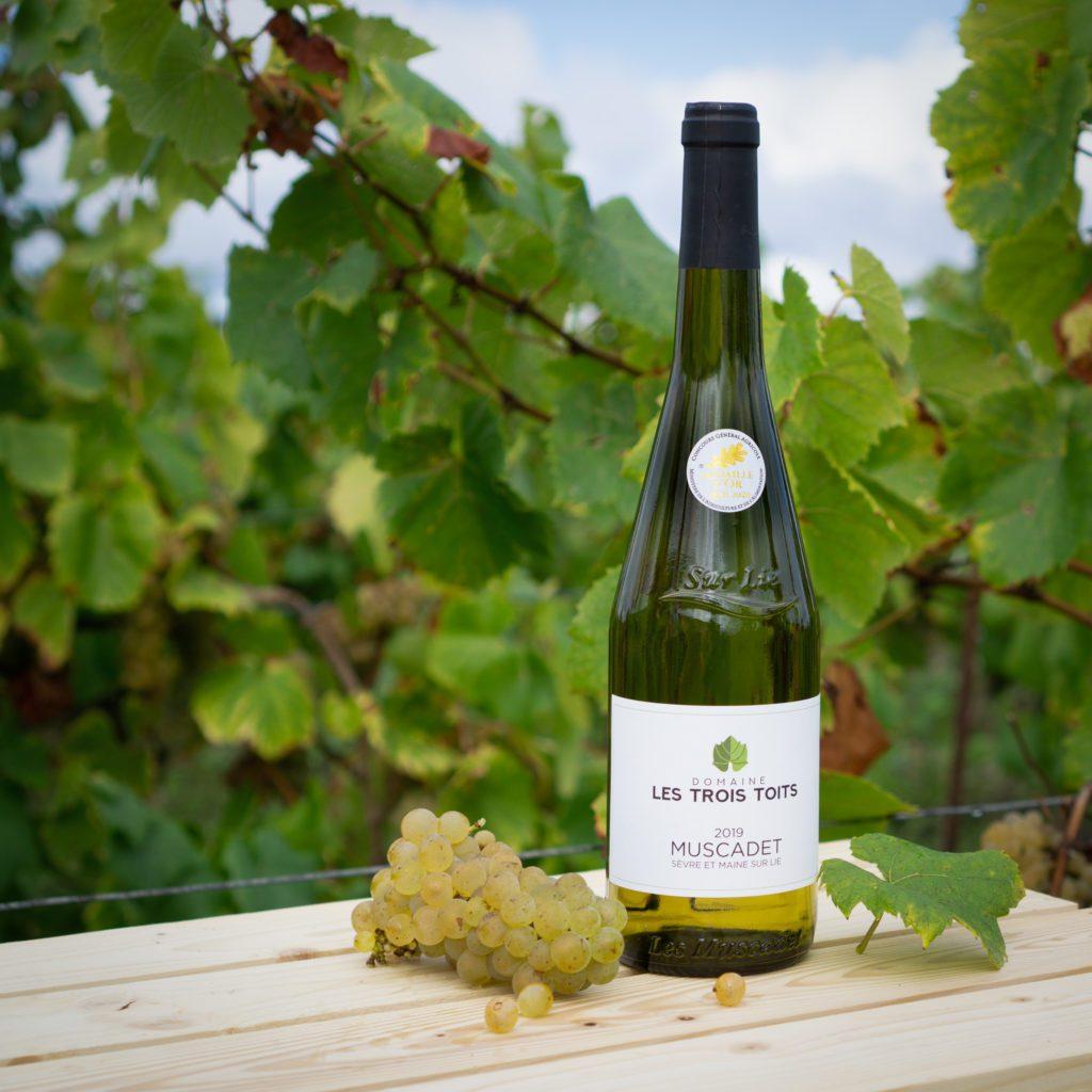 Bouteille de Muscadet sur fond de vigne