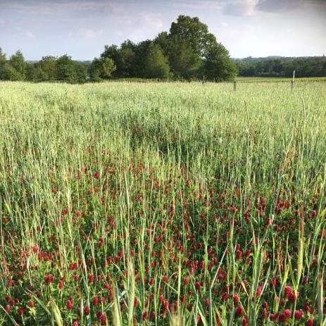Parcelle agroforesterie - Les Trois Toits