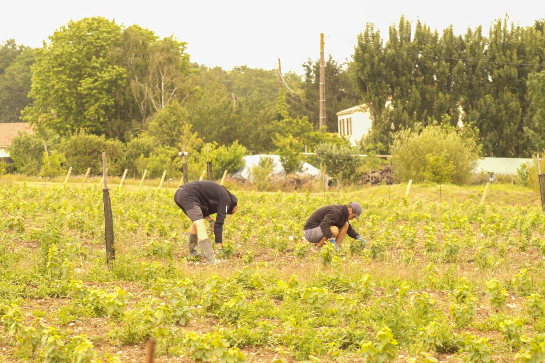 biodiversite-domaine-viticole